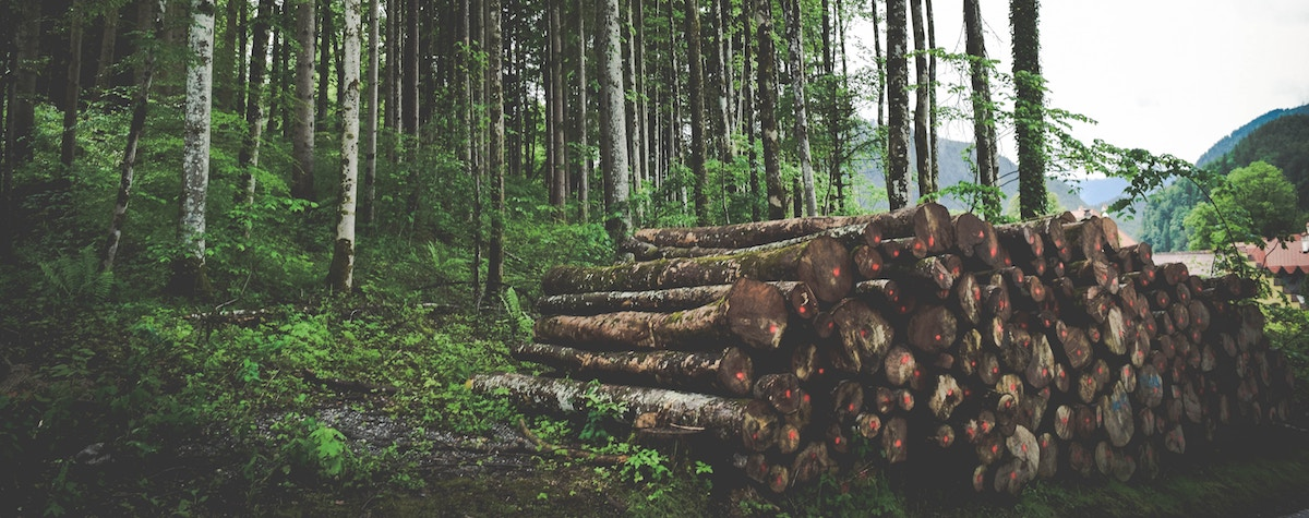 déboisement forestier